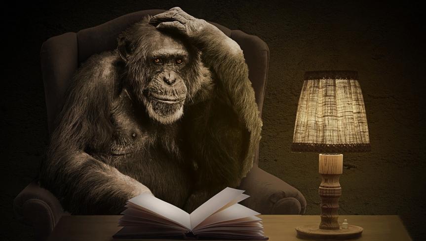 Der Affe und die Bücher: apebook istda